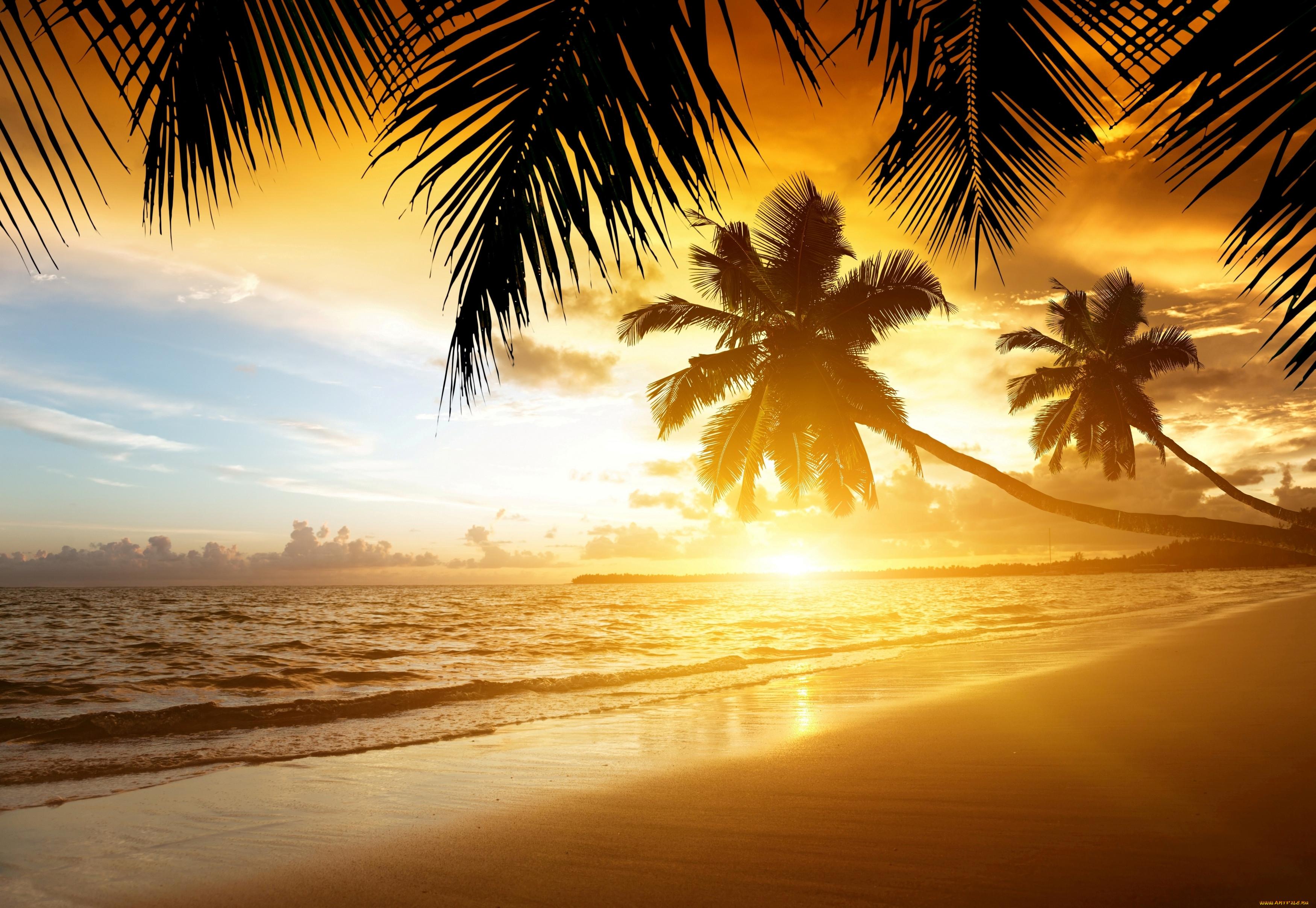 предельно понятно красивые картинки море и пальмы на рабочий стол первую очередь